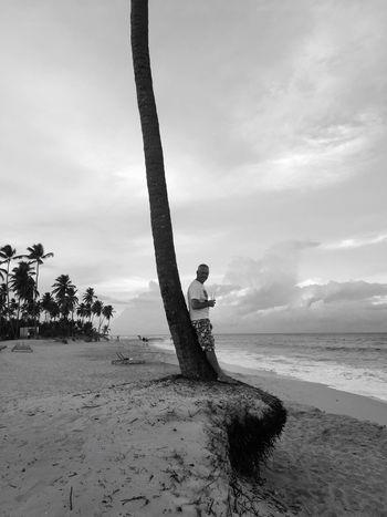 Dominican Republic Beach Sea Palm Tree Chilling Cocktails