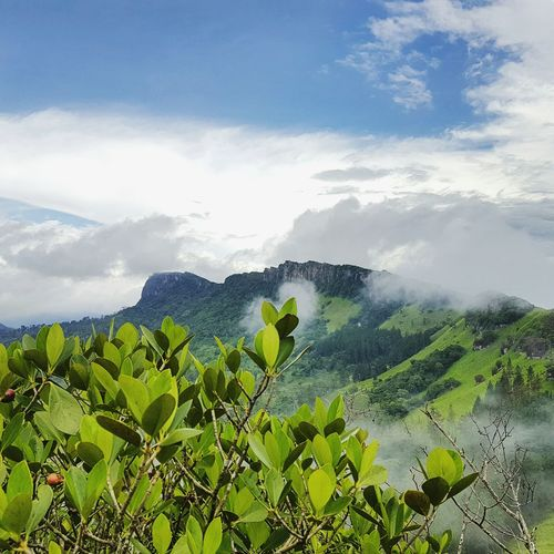Mother of Nature Nature Nature Photography Nature_collection Mountains Plants Green Sky