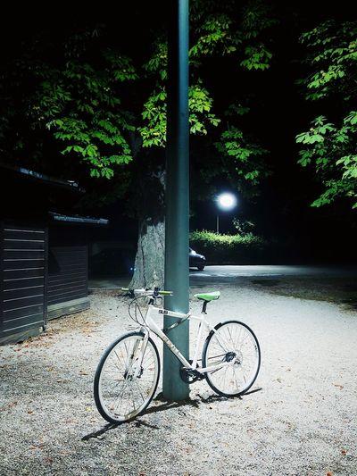 Bike Sustainable Transport Sustainable Energy Sustainability Transportation Beautiful Bike Environmental Protection Energy Efficient Bike Riding Bicycle Bike