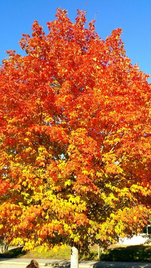 Massachusetts Fall Beauty Fall In New England