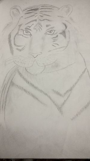 My tiger drawing ^_^Demi's Sketch Book Tiger My Drawing Drawing