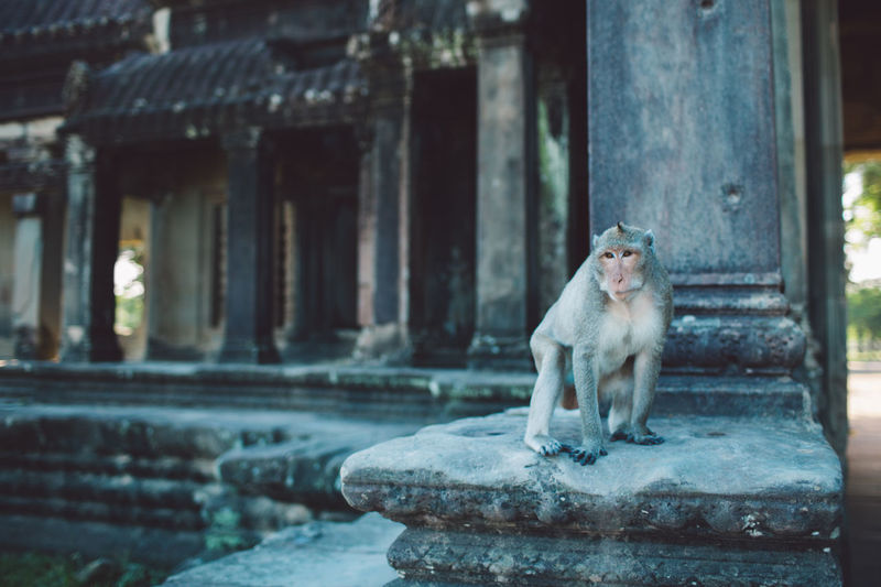 Monkey sitting on a building