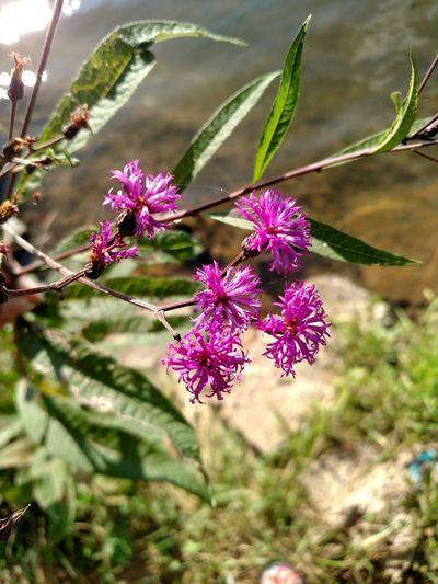 Signsofsummer Wildflowers Lake Life Nature Textures Pennsylvania Beauty EyeEm Nature Lover No Filter