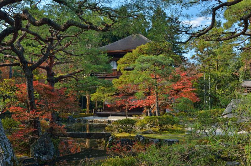 Eyeemphotography EyeEmBestPics Hello World Landscape_photography Temple Kyoto Garden Photography