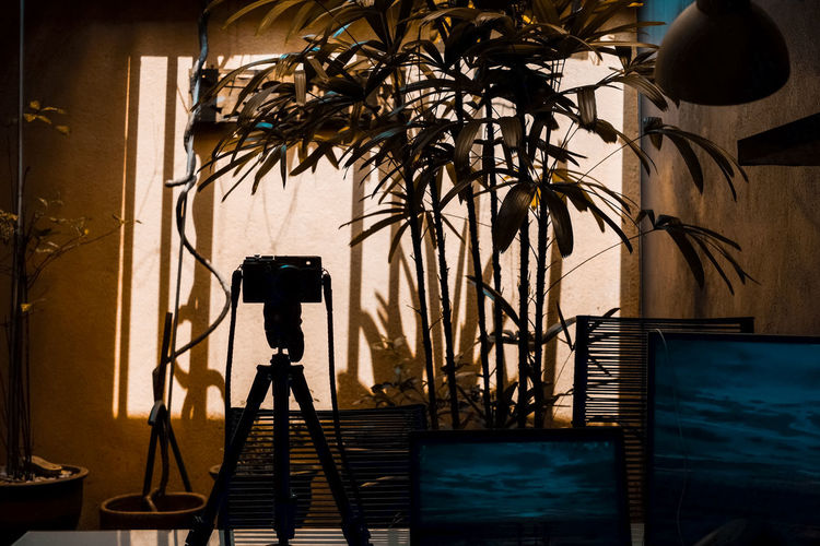 Camera on tripod against plants at home