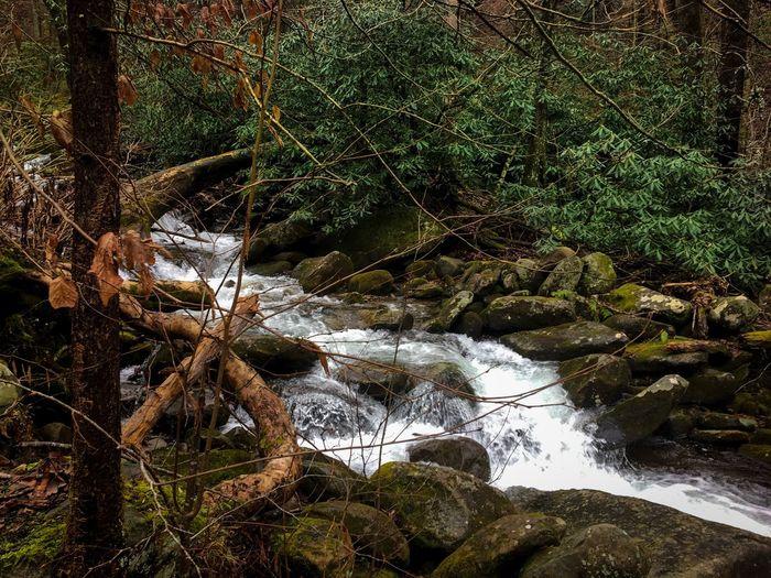 Creek Smokey