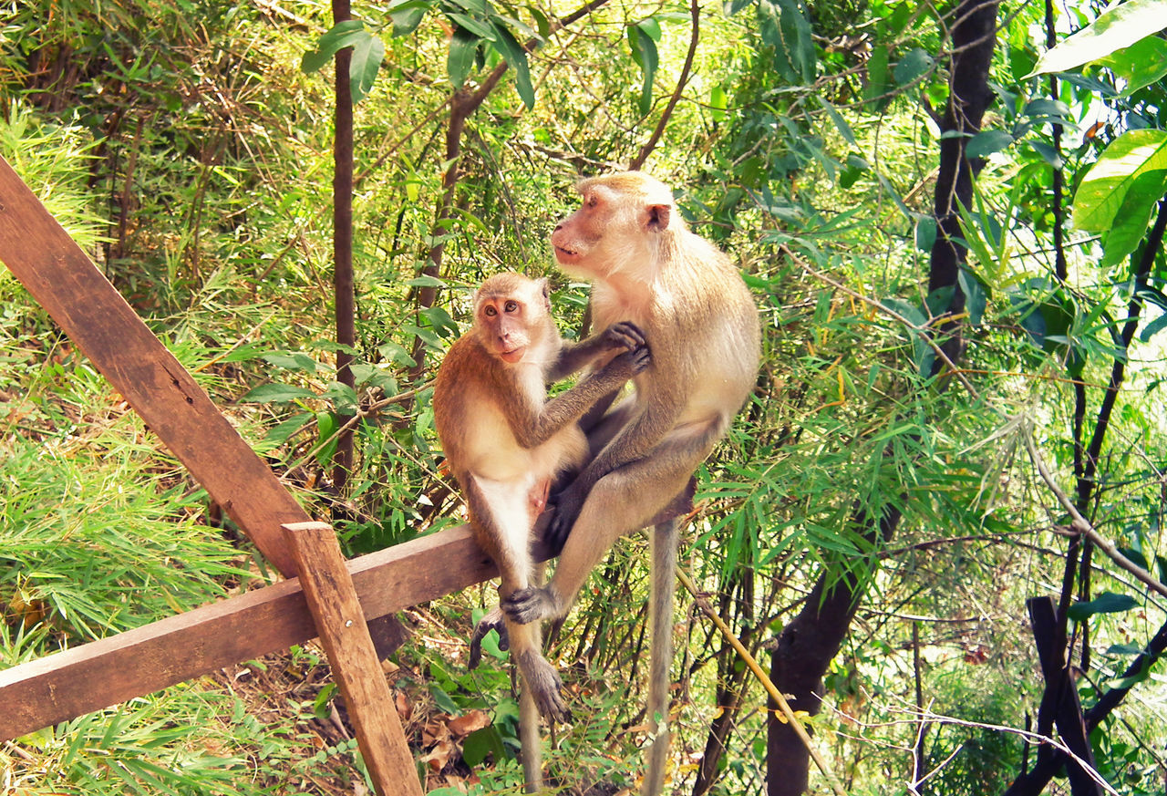 monkey, tree, two animals, primate, infant, animals in the wild, animal themes, mammal, animal wildlife, young animal, day, animal family, outdoors, nature, togetherness, forest, full length, branch, baboon