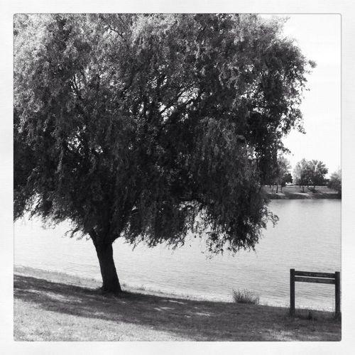 Lac de Beaupuis. Landscape