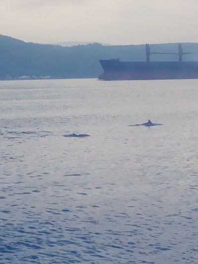 Dolphins Yunuslar Seaside Deniz