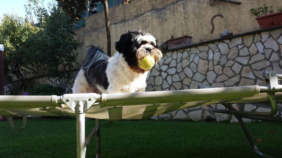 Dogs Gardens Enjoying The Sun Dog Lover