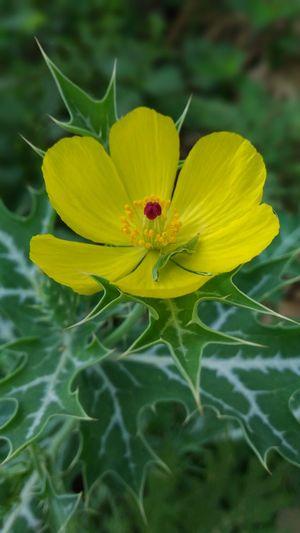 Nature's Love Yellow Flower Redlove Green Nature 💝