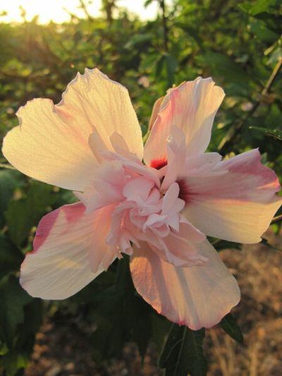 Flowers Nature Garden Sundown Plants Planting Mallorca Nature_collection I Love Nature! Cas Concos Finca