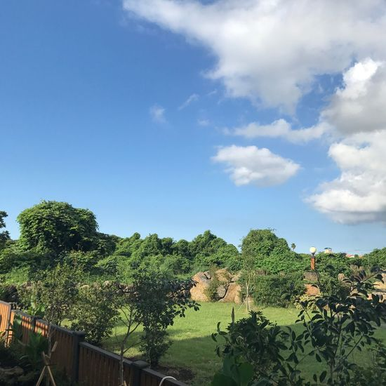 하늘+정원