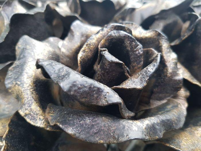Metal Rose Rosé