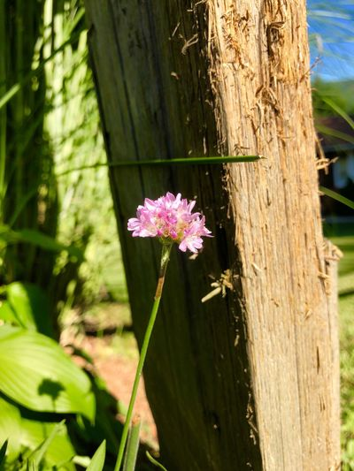 A scratching post. Colors Hitching Post Wood Flowering Plant Plant Flower Growth Nature Fragility Day Fence Outdoors Freshness Close-up Pink Color