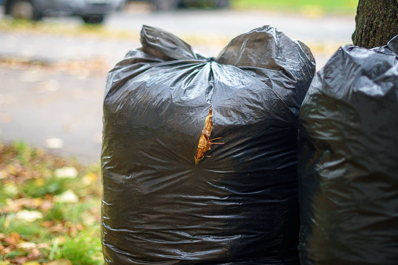 Two black garbage bags full of leaves near the tree
