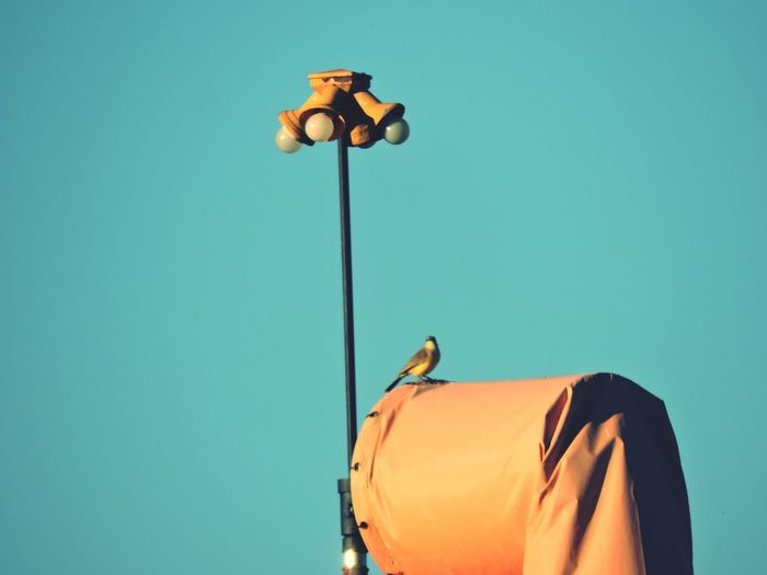 Low angle view of bird perching on flying windsock against clear sky