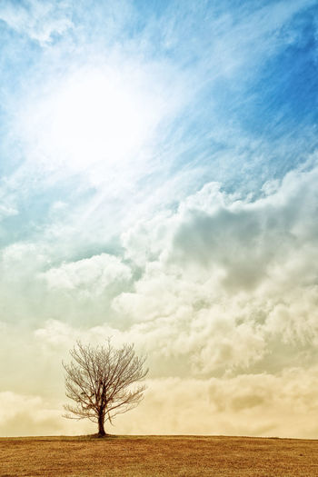 Bare Tree Beauty In Nature Cloud Cloud - Sky Cloudy Day Field Horizon Over Land Idyllic Landscape Nature No People Non Urban Scene Non-urban Scene Outdoors Remote Scenics Single Tree Sky Tranquil Scene Tree