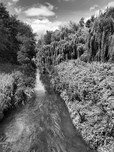 Panoramic shot of river amidst trees in forest against sky