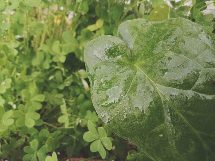 flow me for more pictures Green Color Leaf Plant Nature No People Close-up Growth