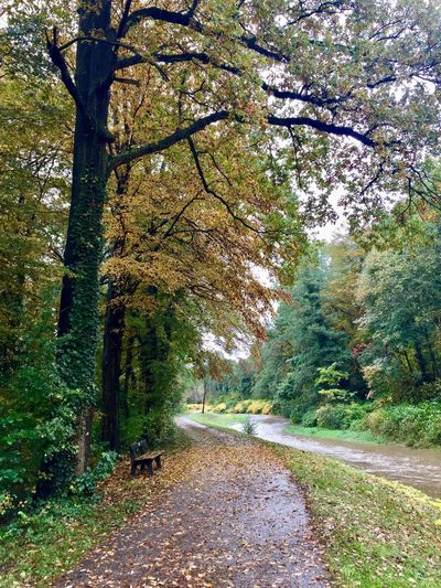 🍃 lonely way 🍂 Creek Water Bench Leaves Trees The Way Forward Road Nature Beauty In Nature Day Autumn Tranquility Scenics Outdoors Tranquil Scene No People Branch Forest Sky
