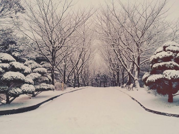 Usw 눈 Snow Heavy Snow Winter January2016 South Korea Phonecamera 와우리스키장 내일은 빙판 폭설 University Of Suwon Showcase: January