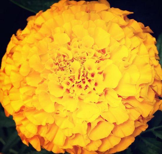 Flowers IPhoneography Justgoshot