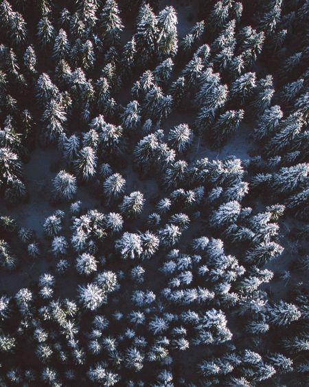 Full frame shot of snow covered tree