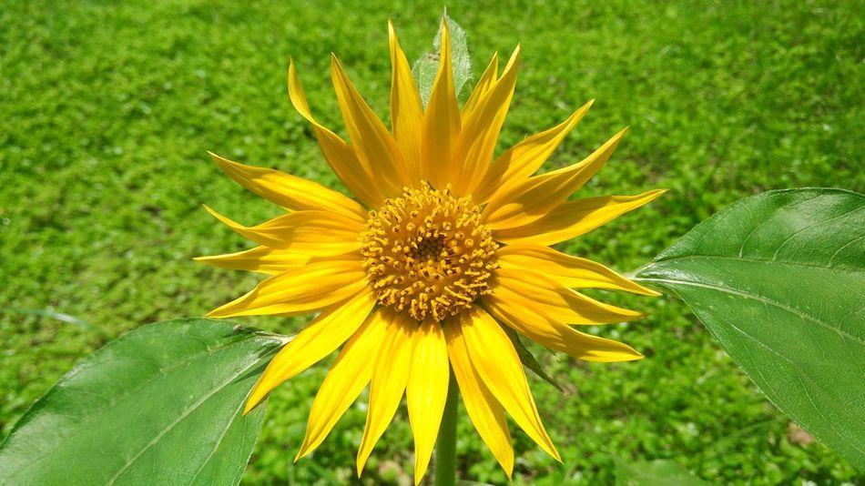 Flower Sunnyday☀️ Yellowandgreen