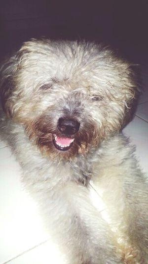 Dogisfamily Doggie Love Animal #furryfriend