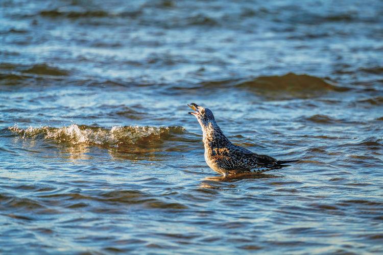 Seabird eating