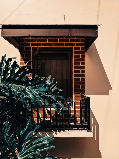 Potted plant on staircase of building