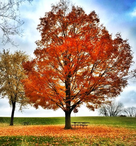 Autumn Leaves Fall Fall Beauty Fall Colors Fall Leaves Iphone 6 Iphone6 IPhoneography Leaves