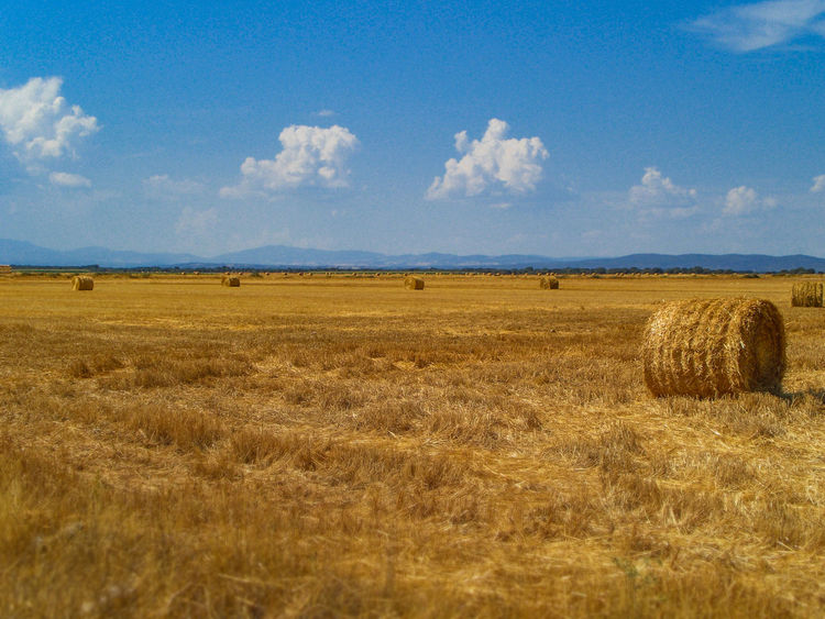 Bale of hay on a mown field Agriculture Autumn Bale  Dry Farm Farming Field Food Gold Grain Grass Harvest Harvesting Hay Land Landscape Nature Plant Rural Rural Scene Season  Sky Stack Wheat