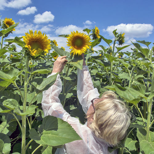 Low angle view of sunflowers on field against sky