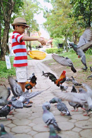 Side View Of Boy Feeding Pigeons On Footpath In Park