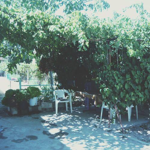 VSCO Garden Nature Vscocam