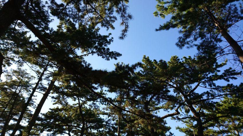 松原 Tree Low Angle View Nature Forest Beauty In Nature Growth No People Sky Day Branch Outdoors Tree Area