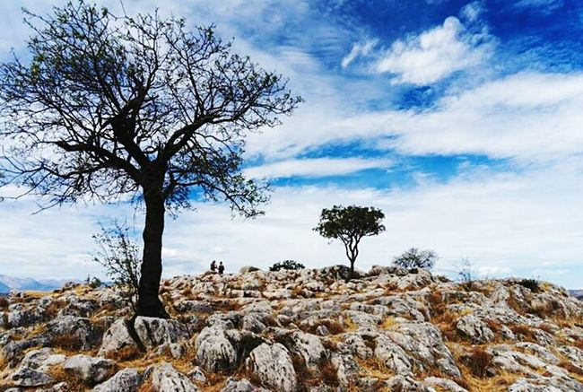 Sky Tree Bare Tree Tranquil Scene Tranquility Cloud - Sky Scenics Beauty In Nature Non-urban Scene Nature Cloud Remote Branch Outdoors Tourism Blue Day Solitude Cloudscape Single Tree Greece Nature Photography