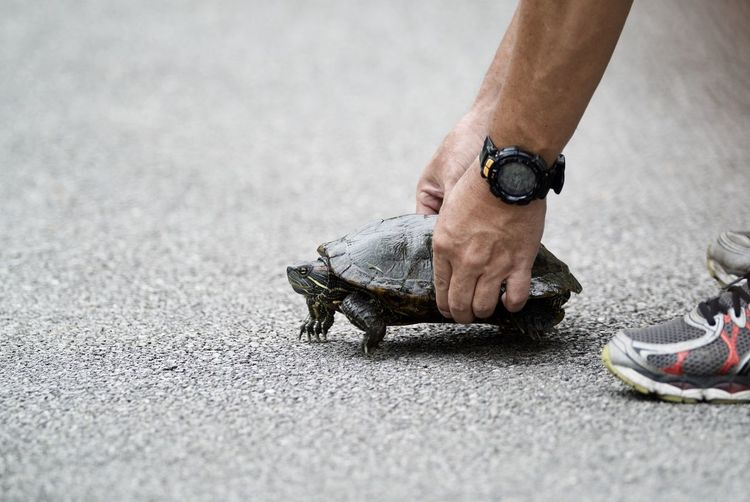 Adult Asphalt Close-up Day Human Body Part Human Hand Human Leg Lifestyles Low Section Men One Animal One Man Only One Person Outdoors People Real People Reptile Retaining Wall Road Shoe Street Tortoise Turtle Walking