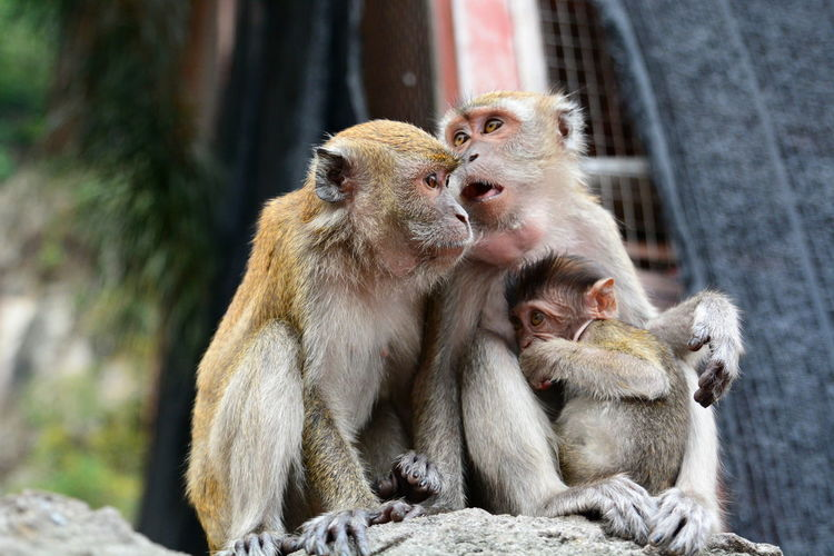 Three Monkeys Together