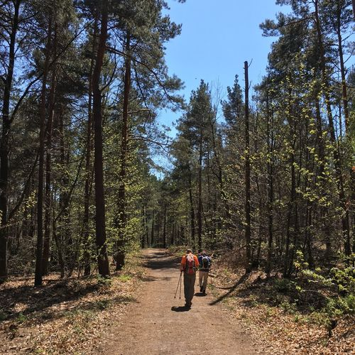 Tree Forest Rear View Full Length One Person Nature Backpack Walking Real People Day Men Hiking Leisure Activity Tranquil Scene Beauty In Nature Tranquility Outdoors Adventure Lifestyles Scenics
