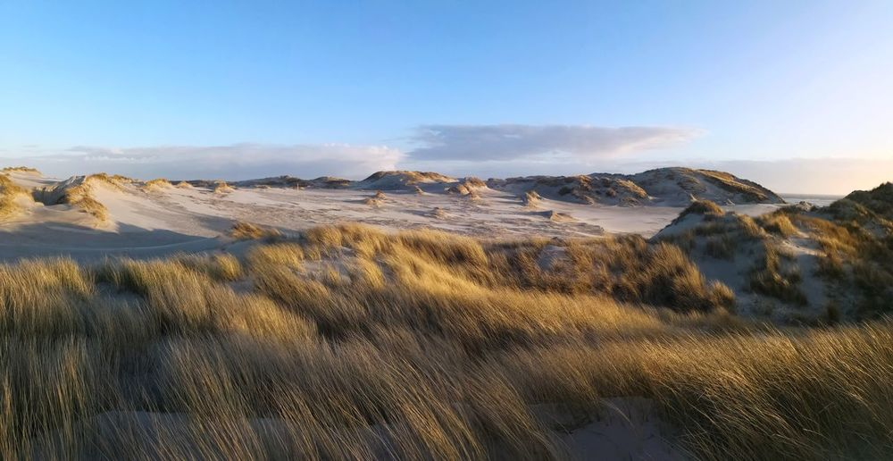 Marram Timothy grass sandy beach panoramic view Northern Frisian Islands Sandy Beach Amrum Amrum Strand Amrum Beach Nobody Sandy Beach Panoramic Beach Panorama Beach Desert Arid Climate Rural Scene Agriculture Sand Dune Sky Landscape Dramatic Landscape Tranquil Scene Coast Countryside Idyllic Scenics Tranquility Natural Landmark Calm Dramatic Sky Cliff Arid Landscape Atmospheric Shore