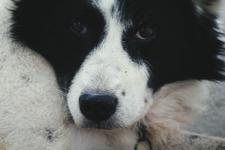 dog Pet Photography  Pet Pets Of Eyeem Pet Owner Pet Lover. My Pets Cooler Than Your Kids Pet Closeups