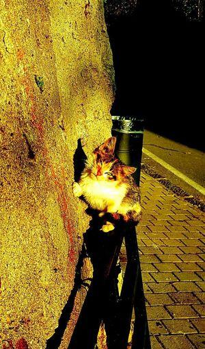 Table No People Shadow Outdoors Day Water Nature Close-up Micio Miao Gatto Gatto😸 Gattobello Gattino Gattino *-* Felino !!! Miciomiao MicioGatto Micino Animale Quattrozampe Tenero Gattinofreddoloso
