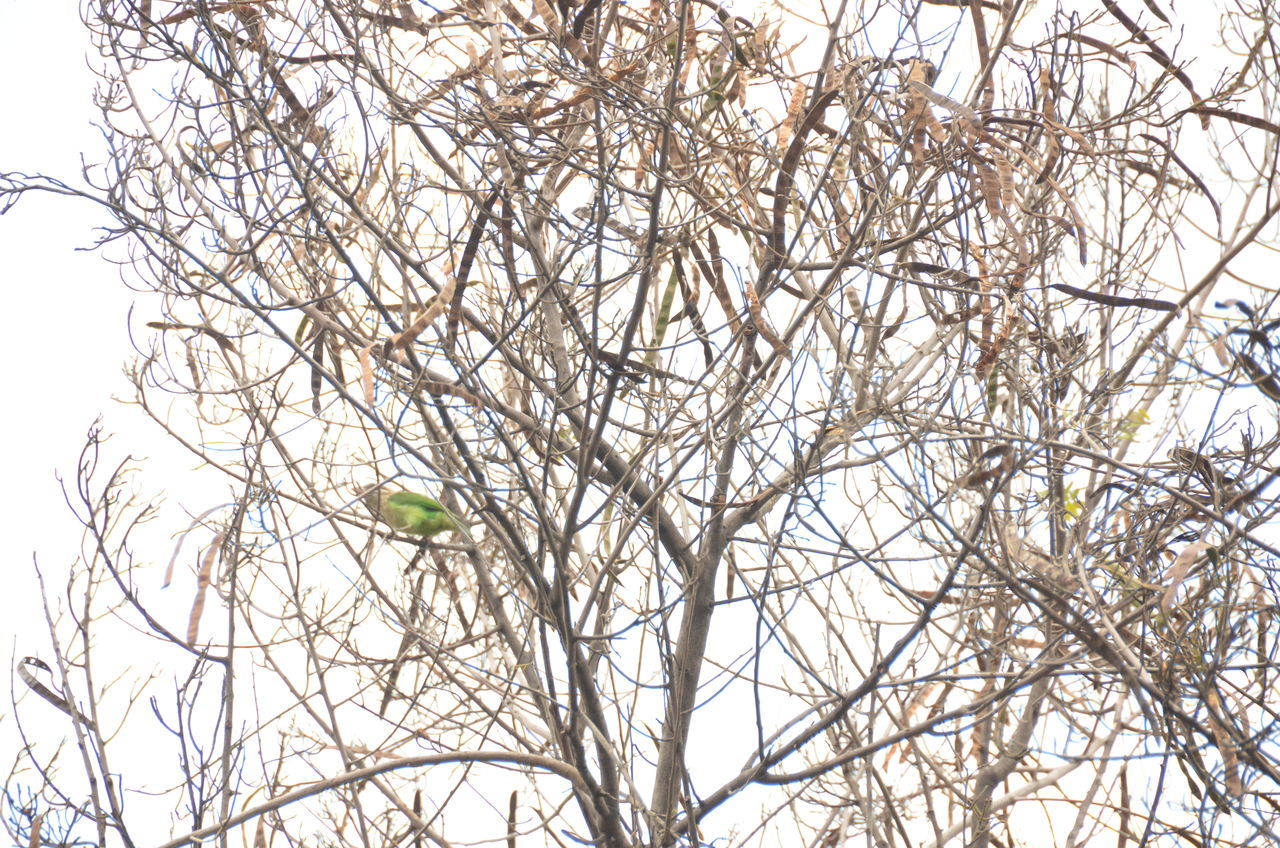 tree, branch, plant, low angle view, no people, bare tree, nature, day, sky, bird, growth, outdoors, animals in the wild, vertebrate, animal themes, winter, one animal, tranquility, animal wildlife