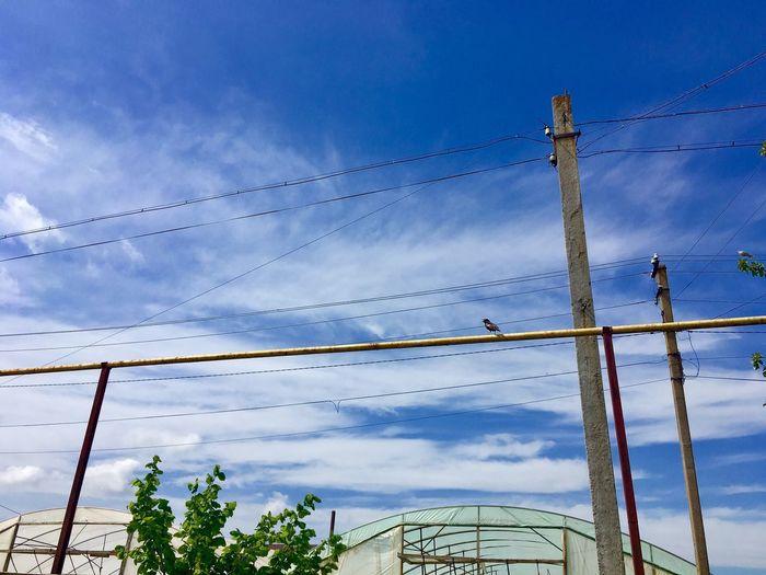 Sky Cloud - Sky Group Of Animals Bird Nature Cable Large Group Of Animals No People Animals In The Wild Flock Of Birds Vertebrate Animal Wildlife Low Angle View Animal