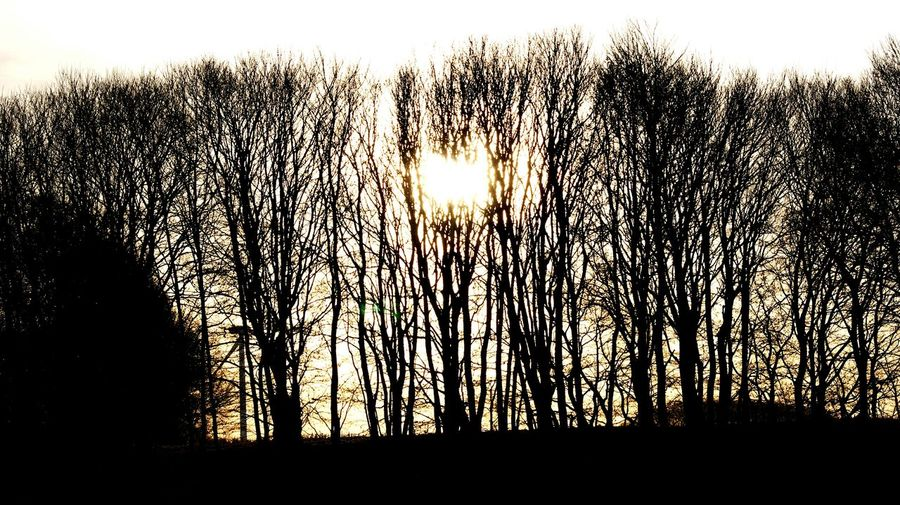 The tree line... Sunrise Sunlight Sun Sky Nature Silhouette Scenics Beauty In Nature No People Sunbeam Outdoors Landscape Tree Refraction Day Moning Walk Landscapes Aalestrup Denmark Outside Moning Tree Line Light Darkness And Light Dark