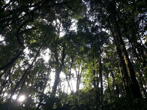 Beauty In Nature Chiangmai Thailand Day Forest Green Color Growth Low Angle View Nature No People Outdoors Sky Tranquility Tree