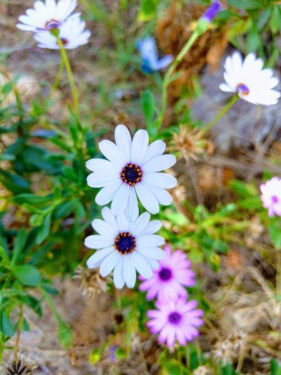 Fliwer White Flower Sydney White Flower Australia Perspectives On Nature